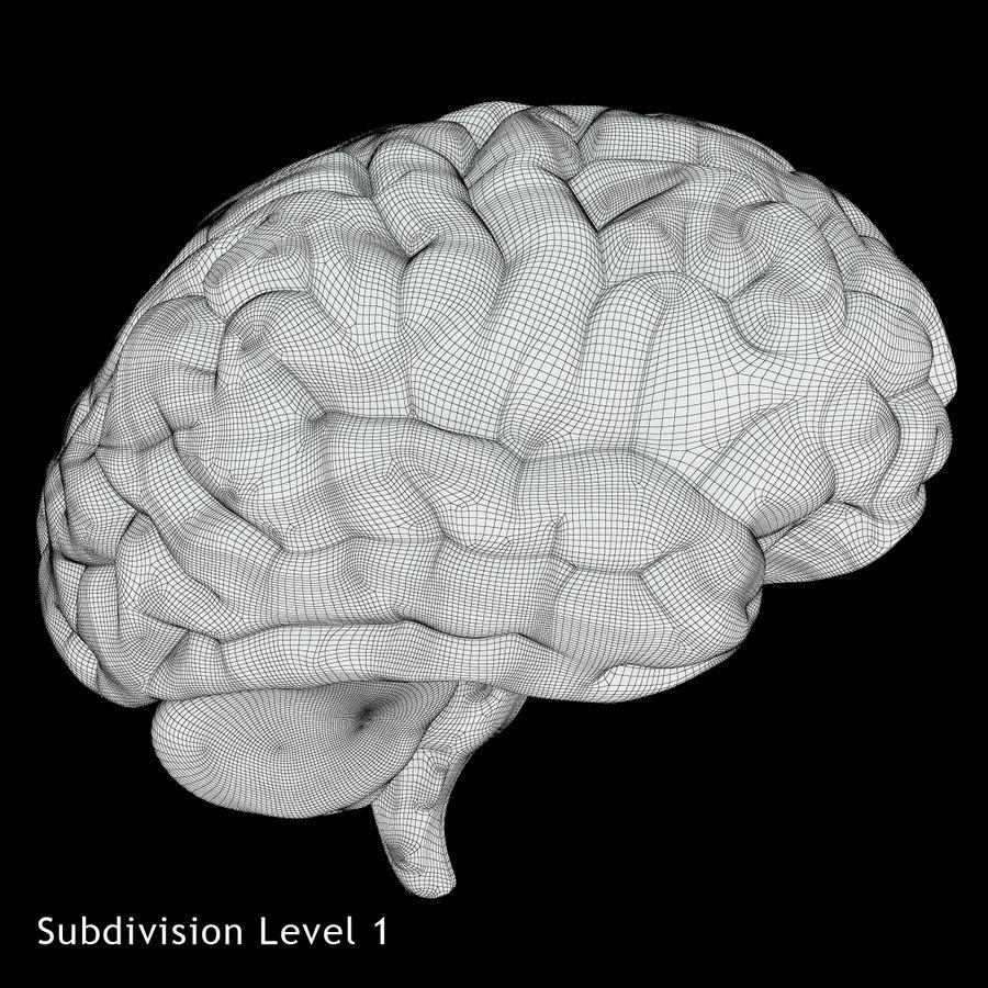 Anatomy Human Brain royalty-free 3d model - Preview no. 12