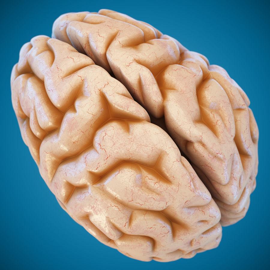 Anatomy Human Brain royalty-free 3d model - Preview no. 7