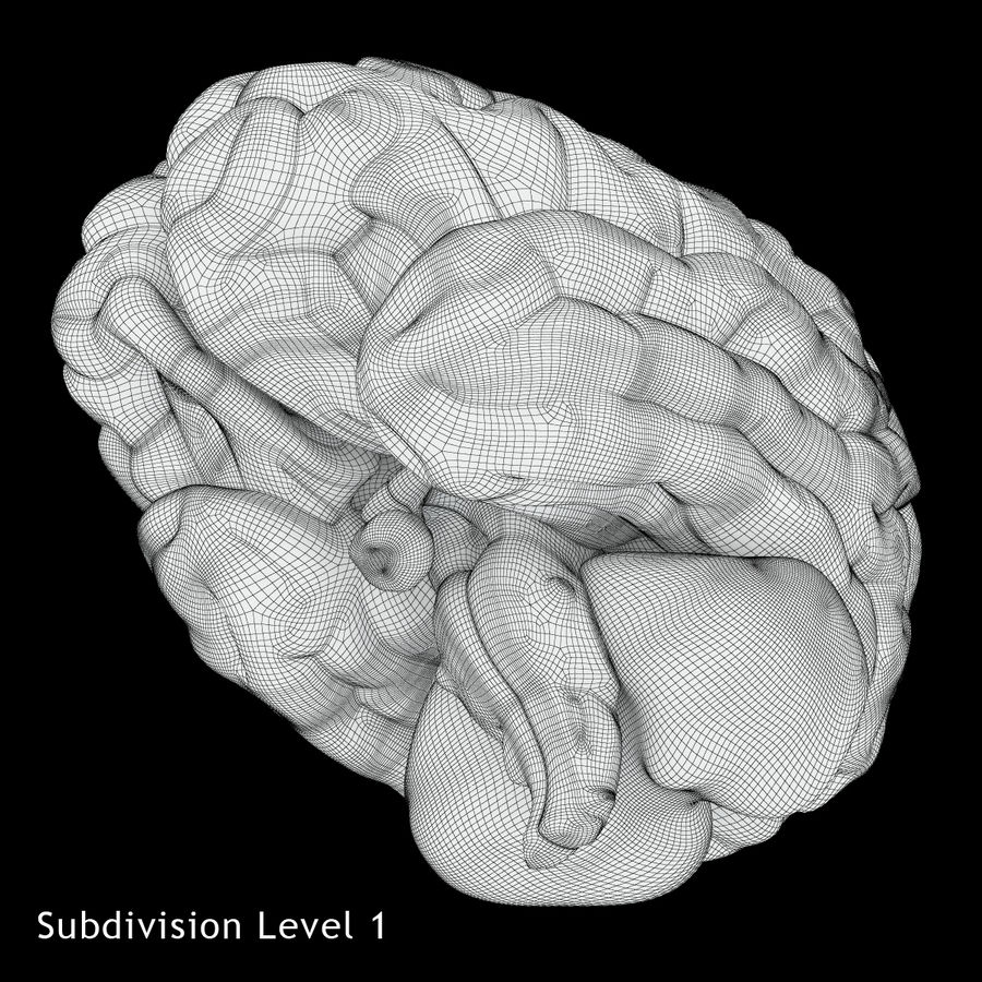 Anatomy Human Brain royalty-free 3d model - Preview no. 14