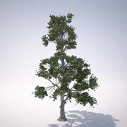 rn ağacı 1 3d model