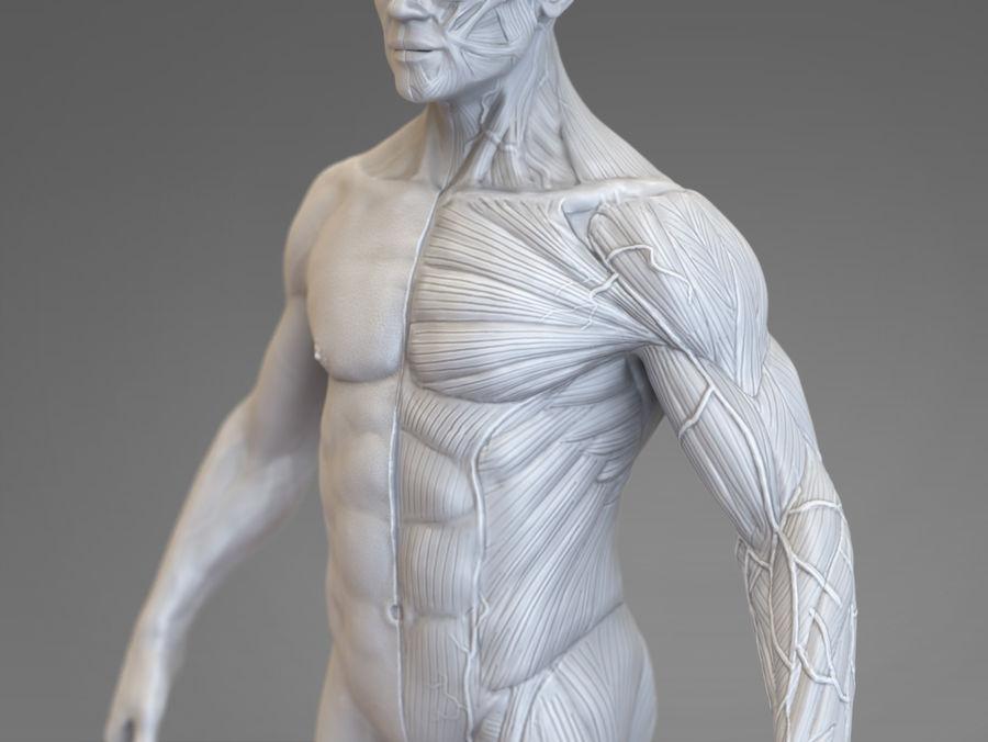 Anatomy Reference 3d Model 10 Unknown Fbx Obj Free3d