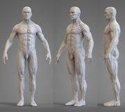 Anatomie-referentie 3d model