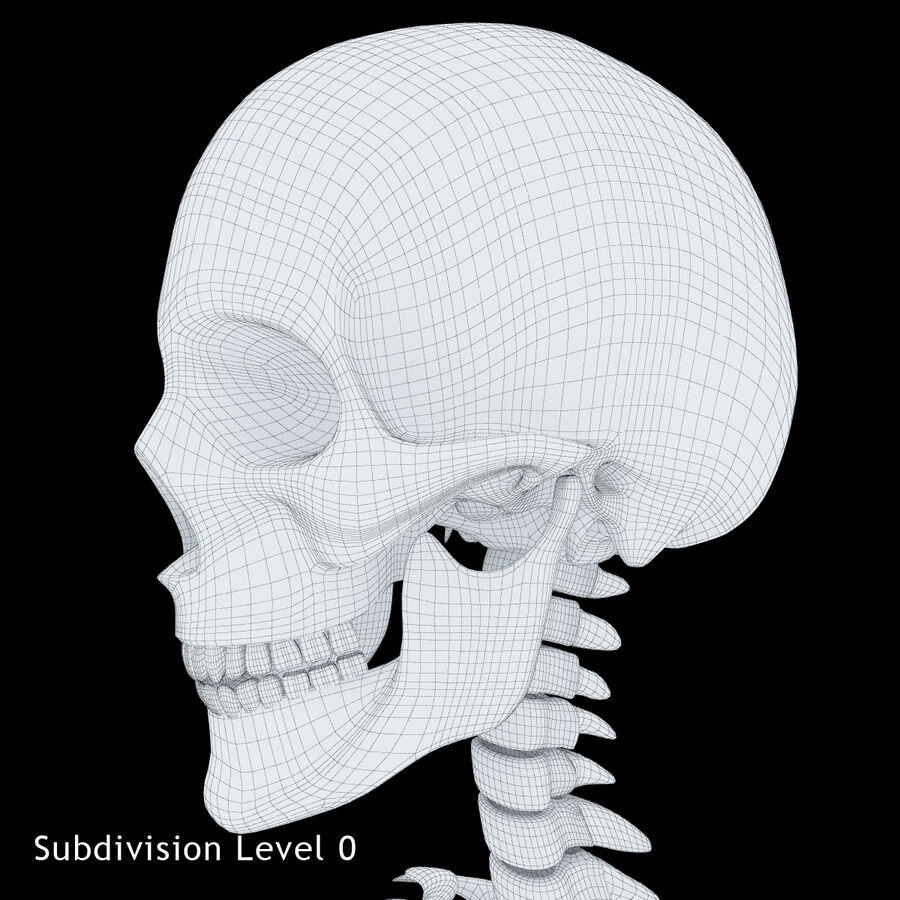 Anatomy Human Skeleton royalty-free 3d model - Preview no. 18