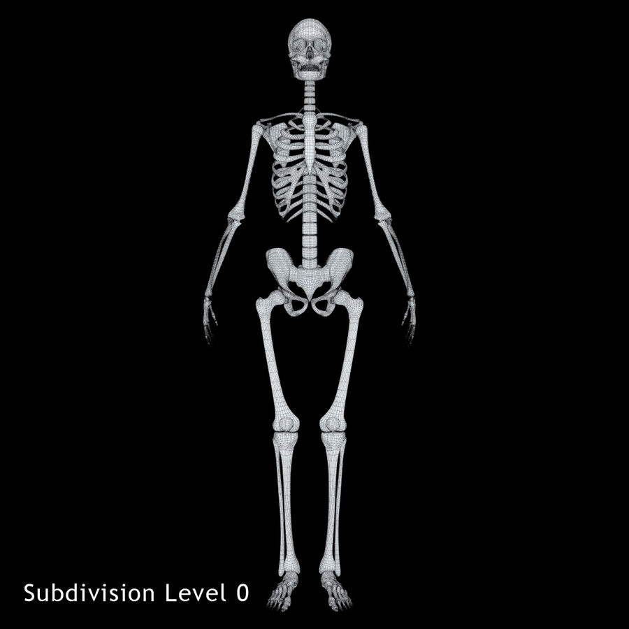 Anatomy Human Skeleton royalty-free 3d model - Preview no. 10