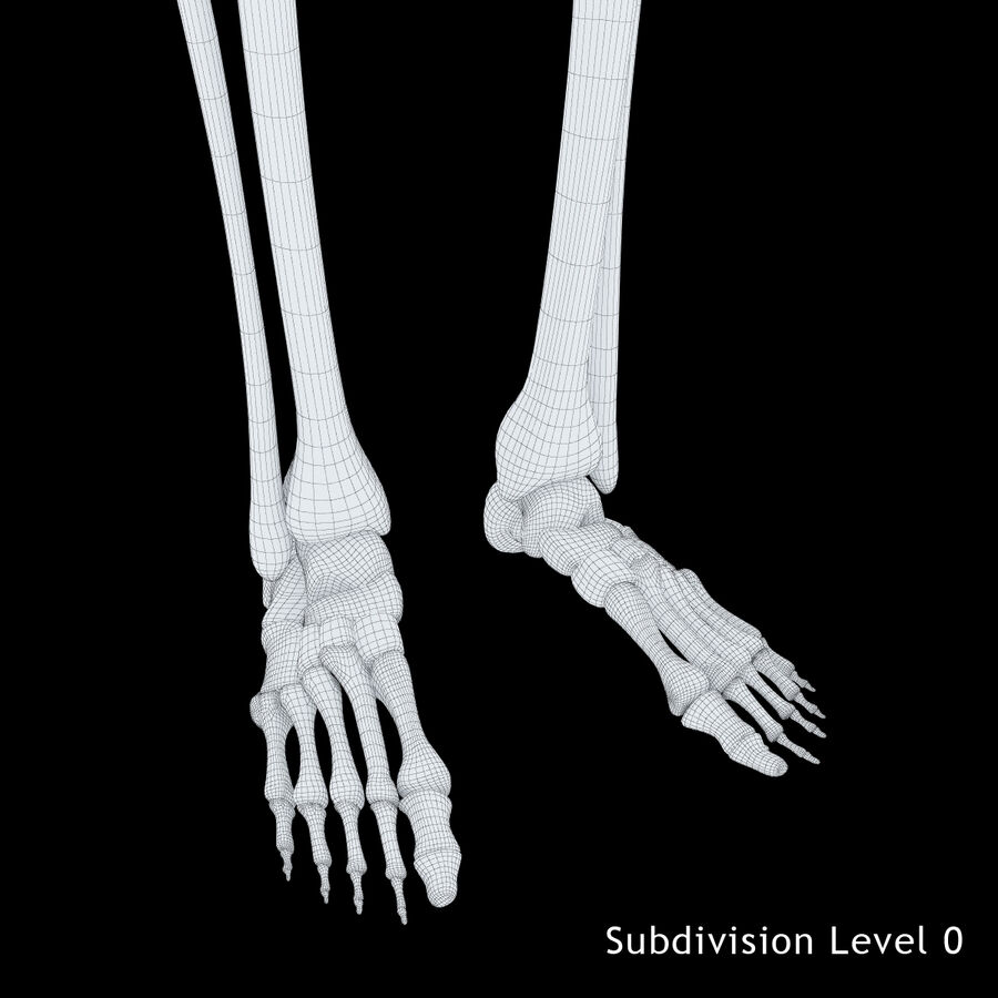 Anatomy Human Skeleton royalty-free 3d model - Preview no. 14