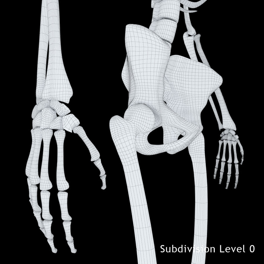 Anatomy Human Skeleton royalty-free 3d model - Preview no. 16