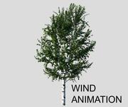 Береза с ветровой анимацией 3d model