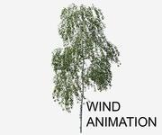 Betula pendula с анимацией ветра 3d model