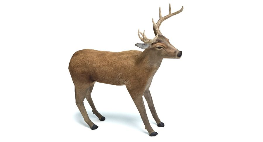 Cerf royalty-free 3d model - Preview no. 6