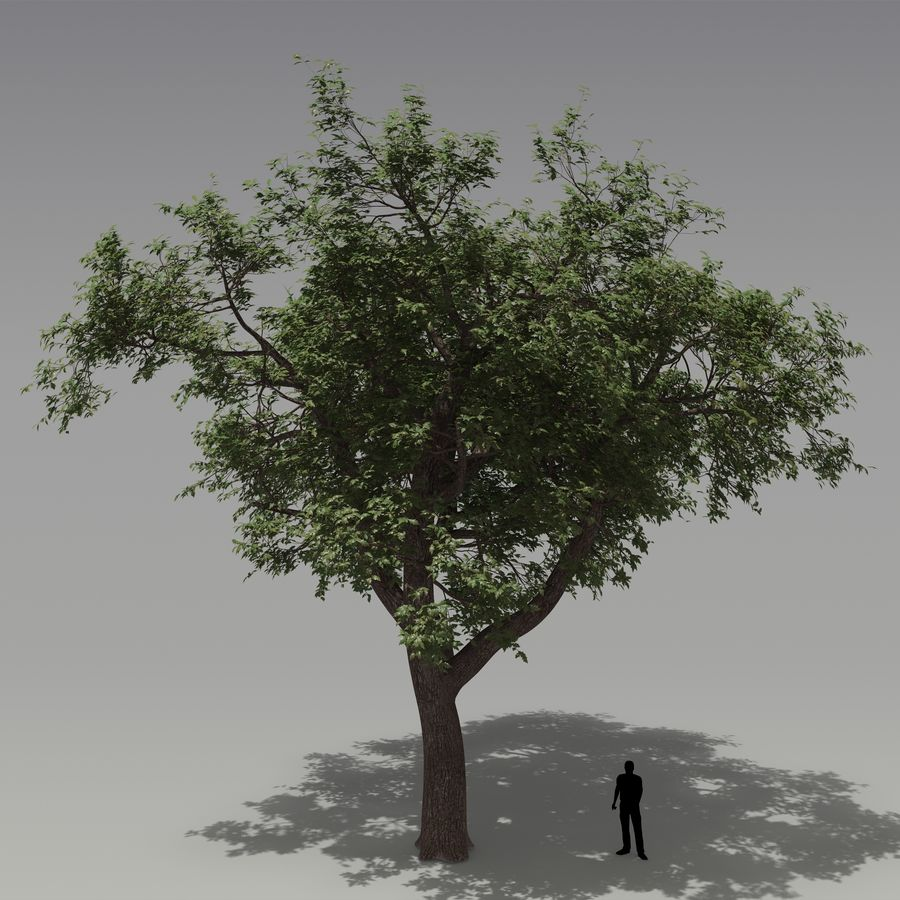 Eiche royalty-free 3d model - Preview no. 1