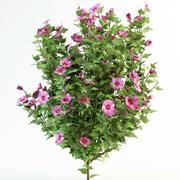Hibiscus syriacus  120 3d model