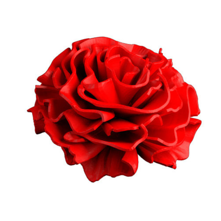 Carnation flower blossom 3D Printable royalty-free 3d model - Preview no. 4