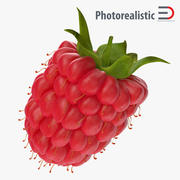 Fresh Ripe Raspberry 3d model
