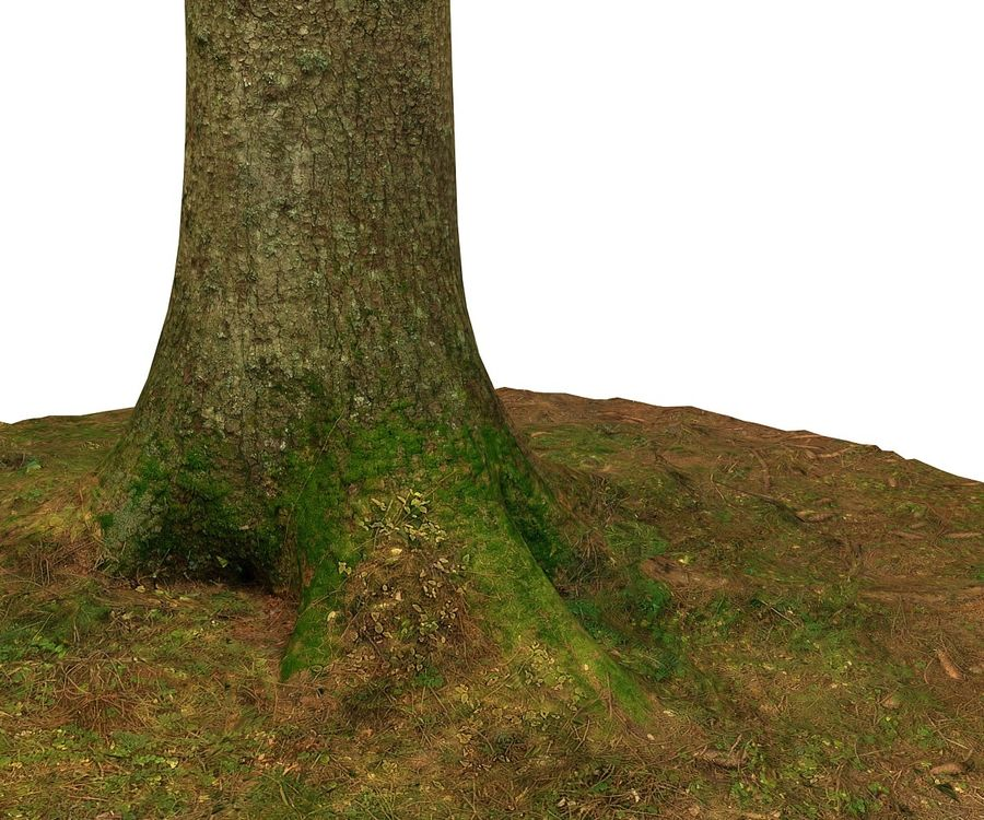 pine tree royalty-free 3d model - Preview no. 6