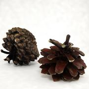 Pine cone open+closed 3d model