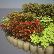 Coleus Bed im August 3d model