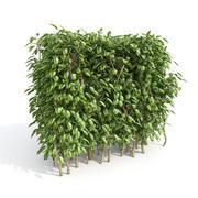 Set of bushes 3d model