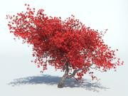 나무 단풍 나무 3d model