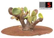 Real  Cactus  8K 3d model