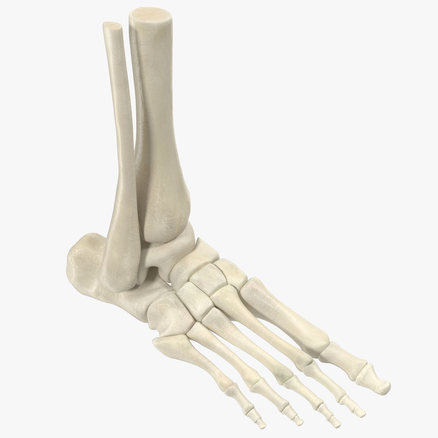 Human Skeleton Foot 3d Model 39 C4d X Obj 3ds Free3d