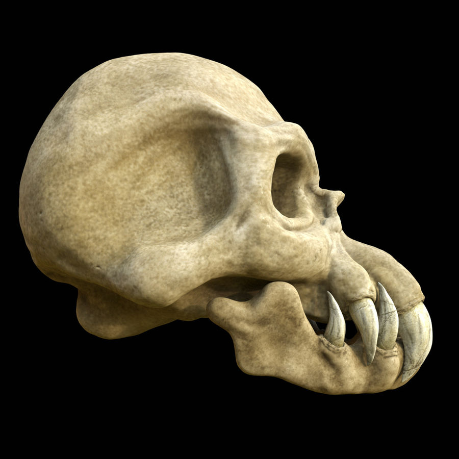 Monster Skull royalty-free 3d model - Preview no. 4