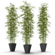 krzew bambusowy nowy 3d model