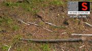 Forest litter ground 20K scan HD 3d model