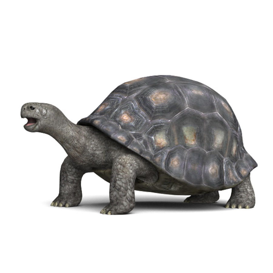 Tortuga royalty-free modelo 3d - Preview no. 1