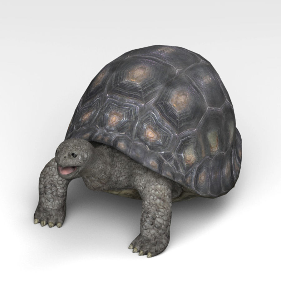 Tortuga royalty-free modelo 3d - Preview no. 5