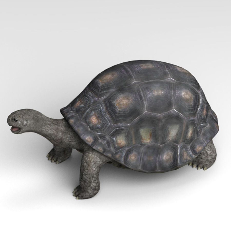 Tortuga royalty-free modelo 3d - Preview no. 4