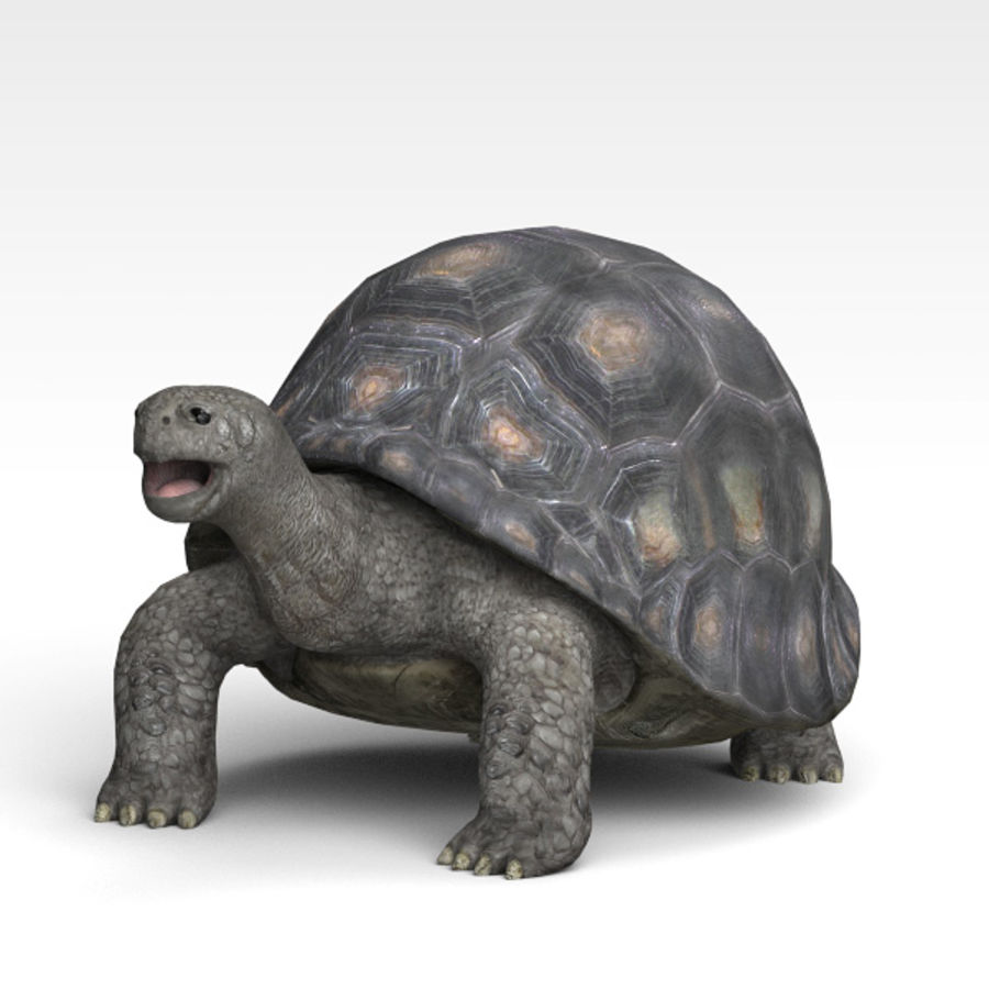Tortuga royalty-free modelo 3d - Preview no. 2
