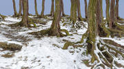 Winter Forest 3d model