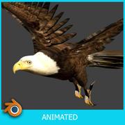 白头鹰 3d model