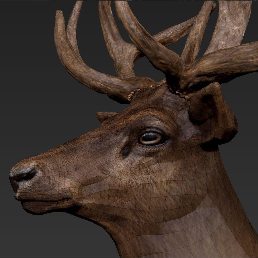 cervo adattato al sartiame royalty-free 3d model - Preview no. 6