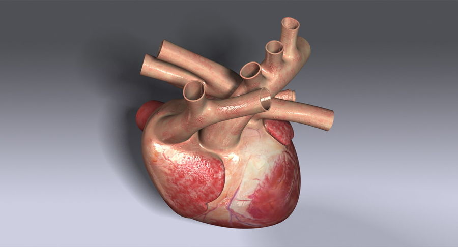Menselijk hart royalty-free 3d model - Preview no. 9