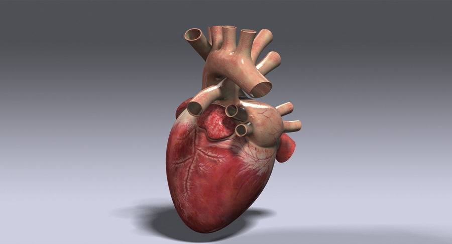 Menselijk hart royalty-free 3d model - Preview no. 7