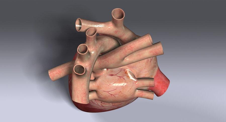 Menselijk hart royalty-free 3d model - Preview no. 10