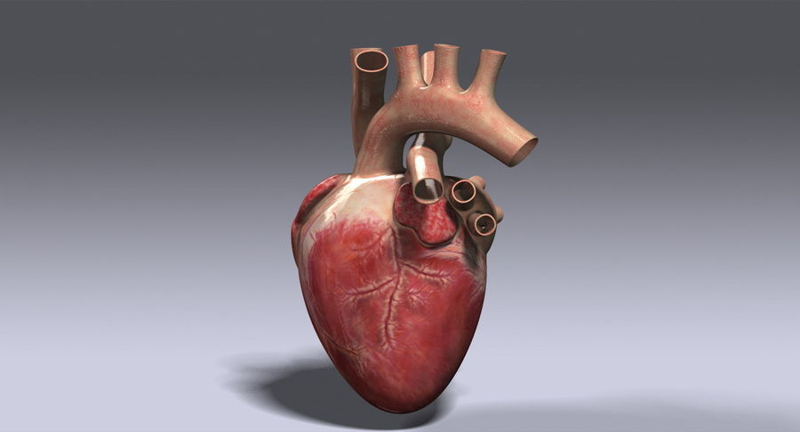 Menselijk hart royalty-free 3d model - Preview no. 8