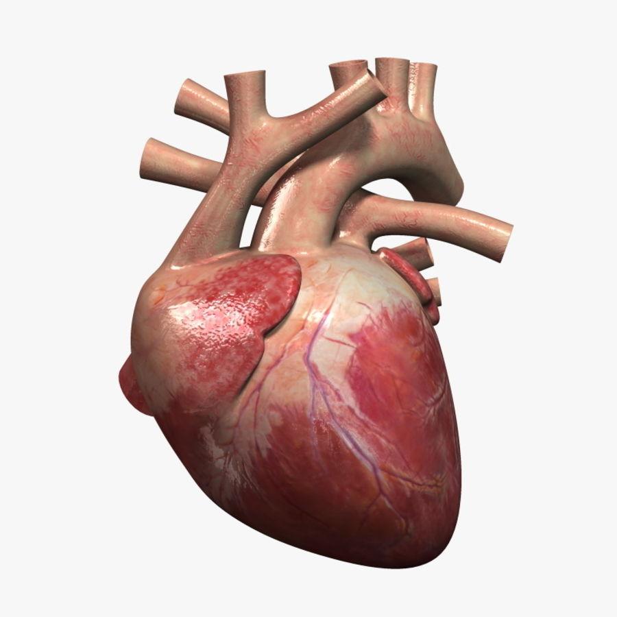 Human Heart 3D Model $19 - .max .obj .ma .3ds - Free3D