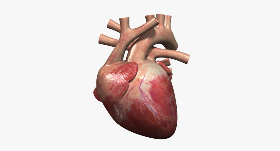 Menselijk hart royalty-free 3d model - Preview no. 1