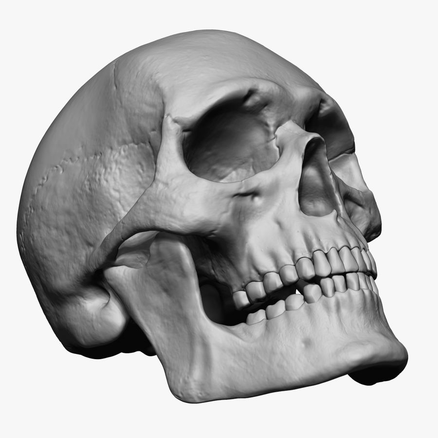 Caucasoid Male Skull Zbrush royalty-free 3d model - Preview no. 3