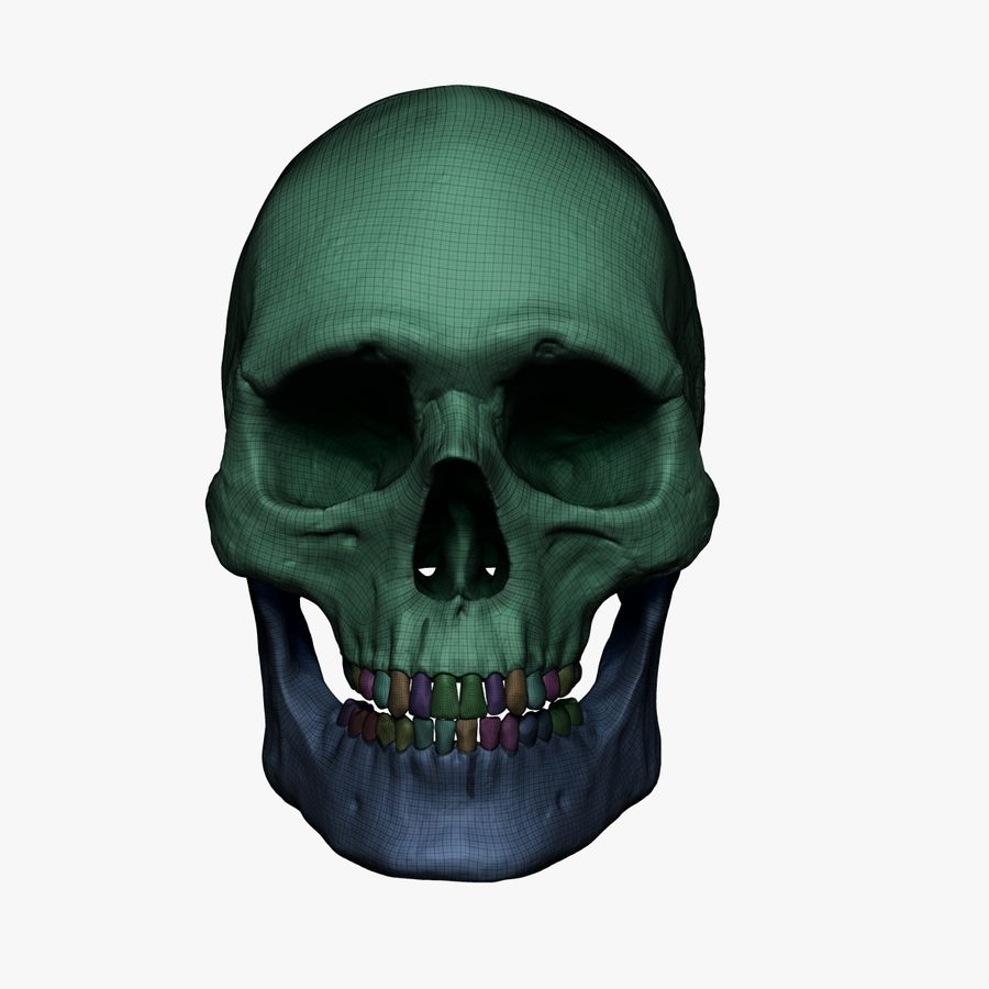 Caucasoid Male Skull Zbrush royalty-free 3d model - Preview no. 12