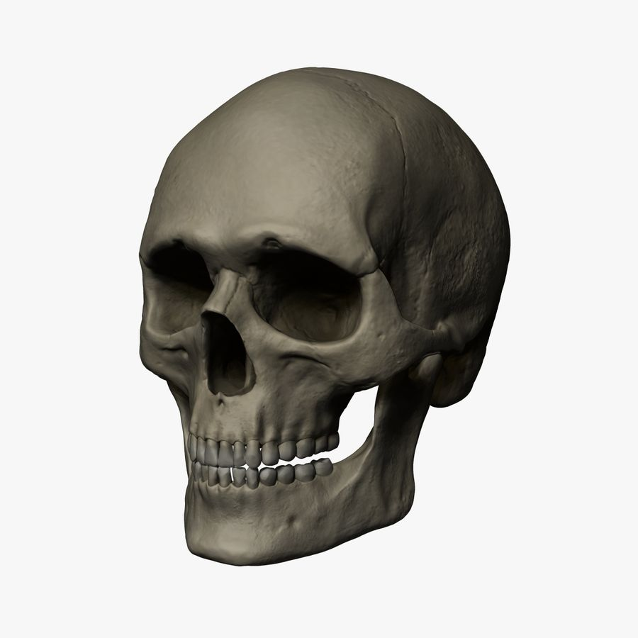Caucasoid Male Skull Zbrush royalty-free 3d model - Preview no. 10
