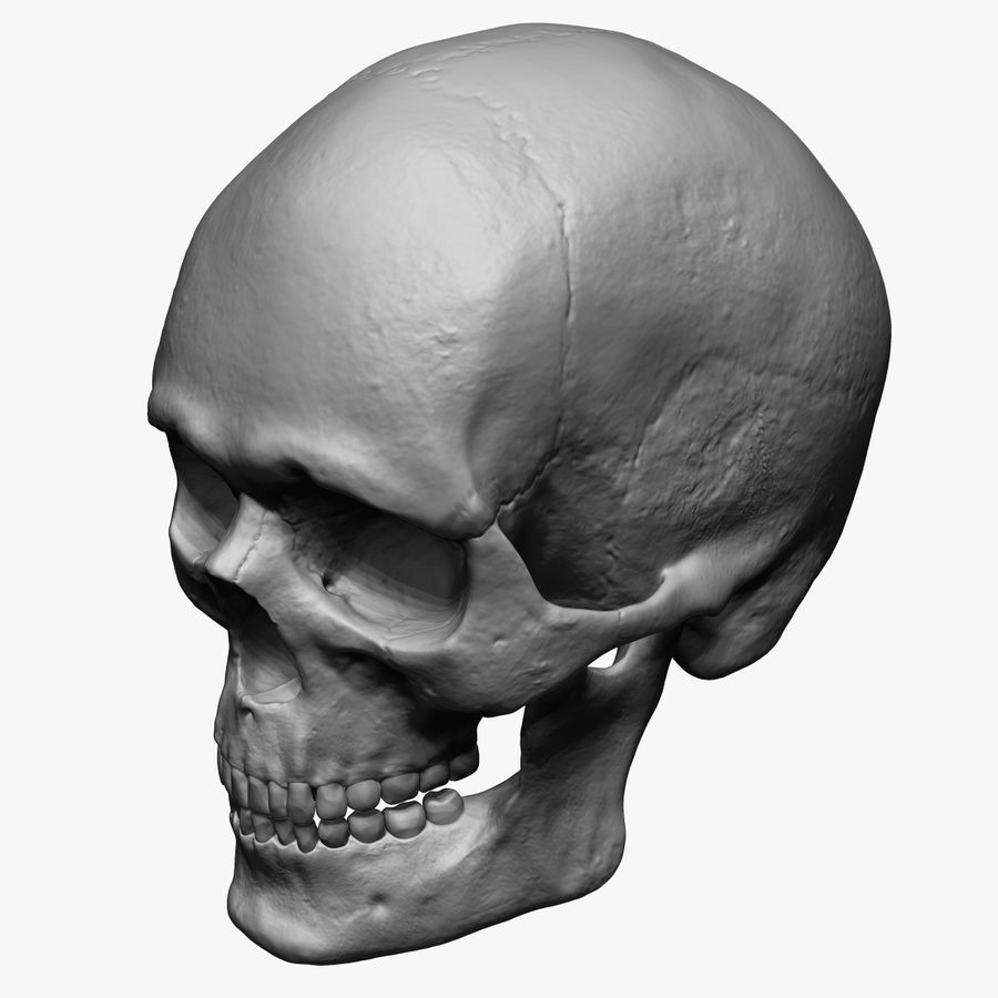 Caucasoid Male Skull Zbrush royalty-free 3d model - Preview no. 2