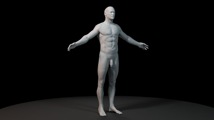 Anatomi modeli royalty-free 3d model - Preview no. 2