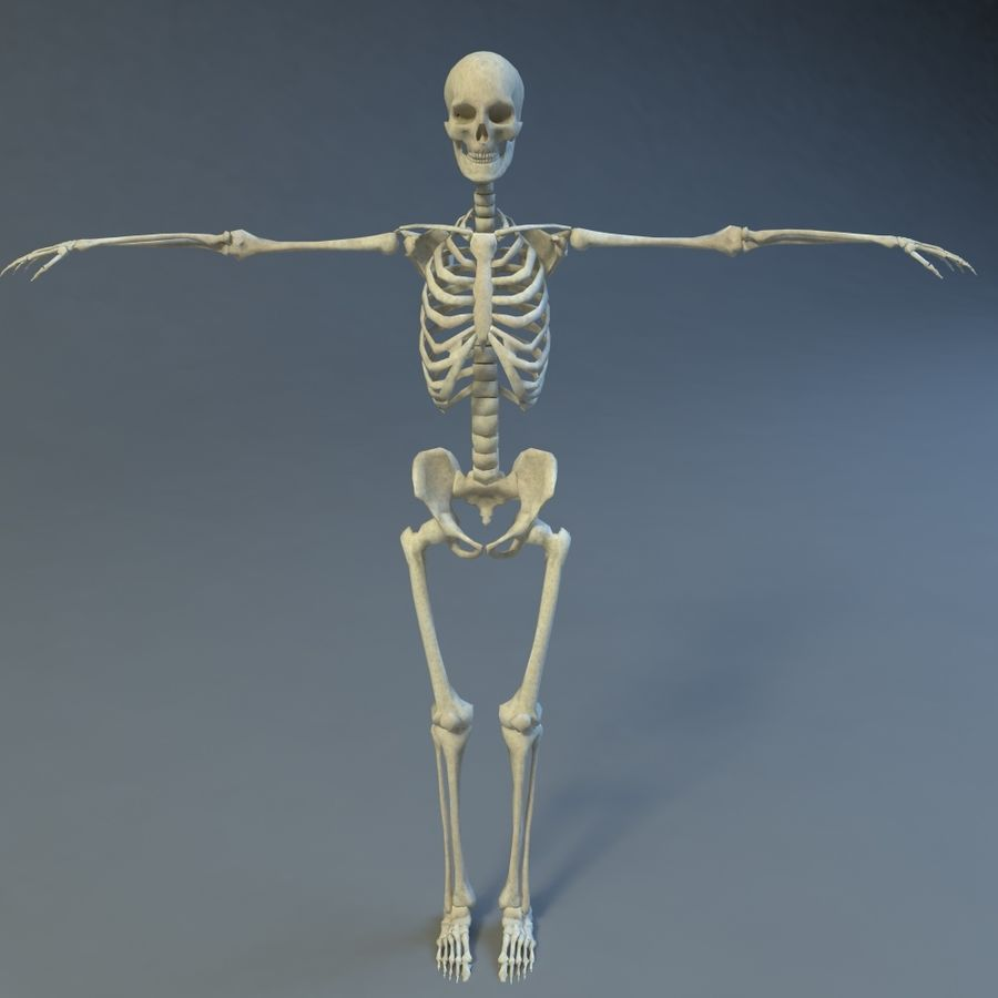 Skeleton royalty-free 3d model - Preview no. 3