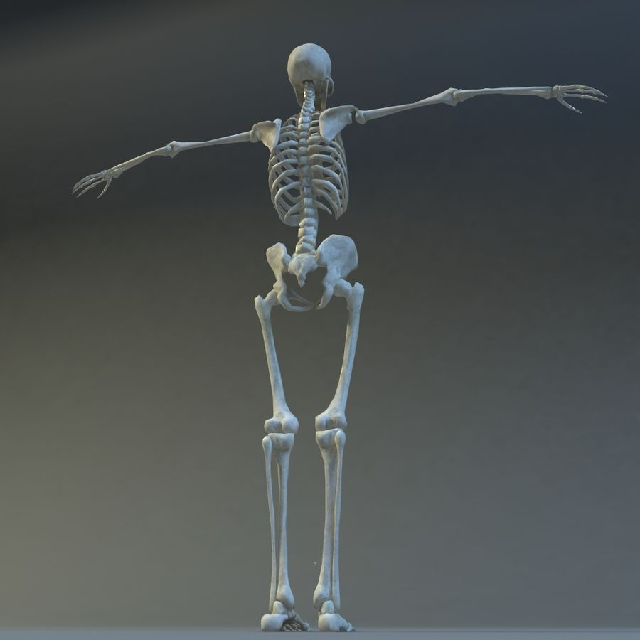Skeleton royalty-free 3d model - Preview no. 8