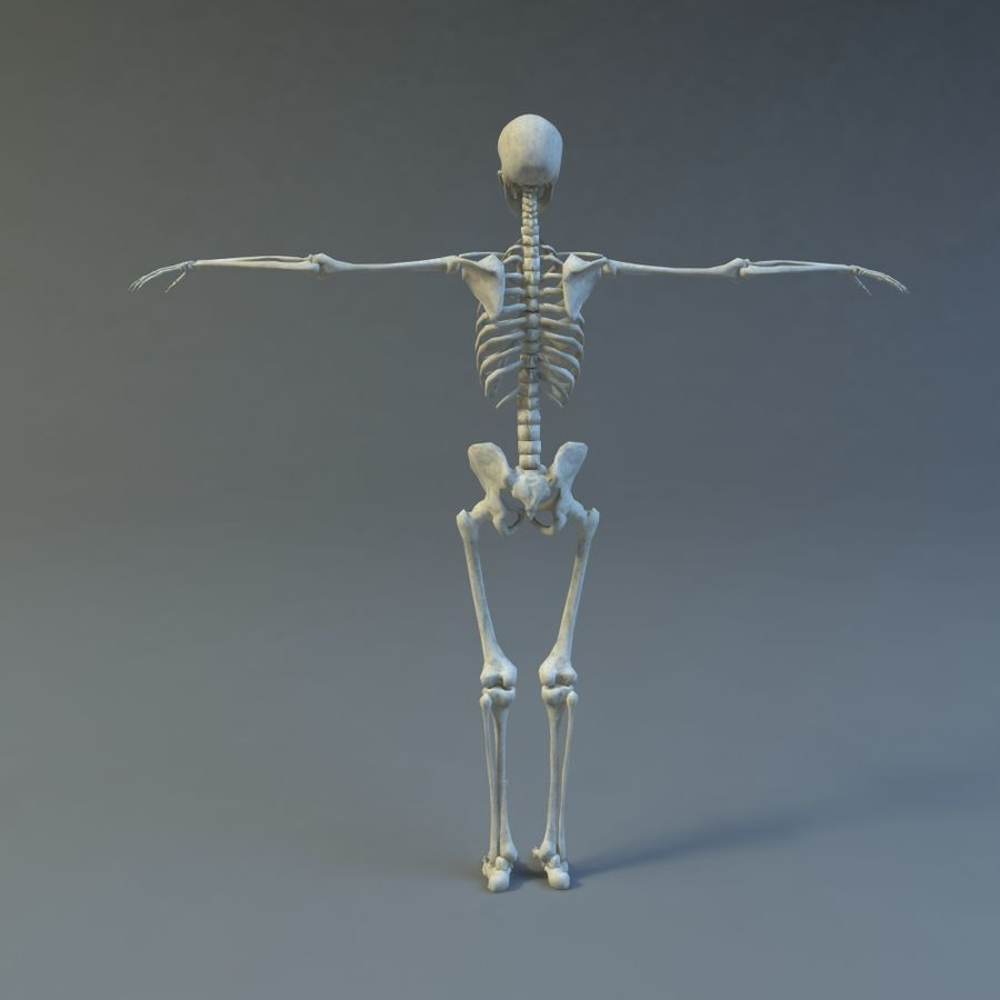 Skeleton royalty-free 3d model - Preview no. 6