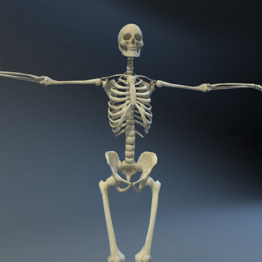 Skeleton royalty-free 3d model - Preview no. 5