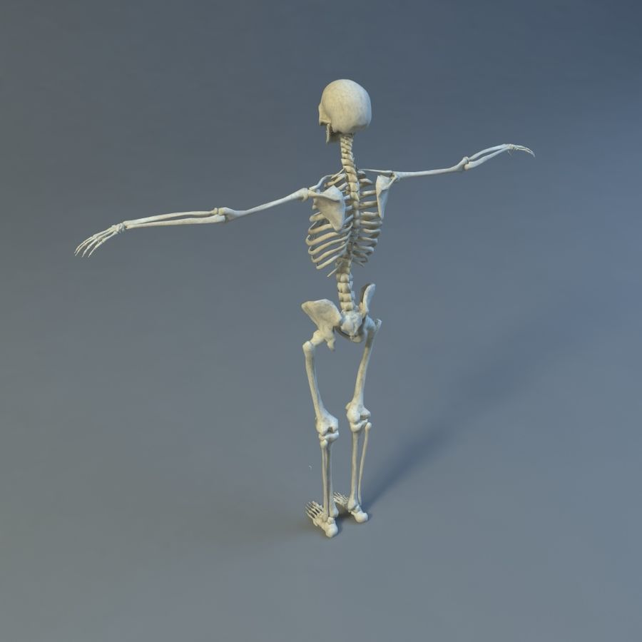Skeleton royalty-free 3d model - Preview no. 7